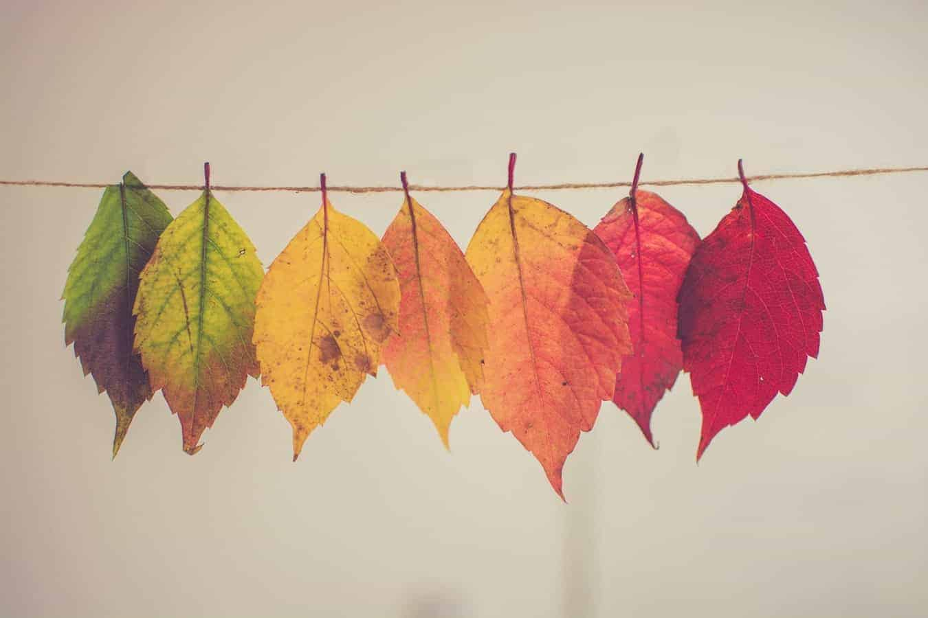 7 leaves, going from green to yellow to red, pegged to a thread
