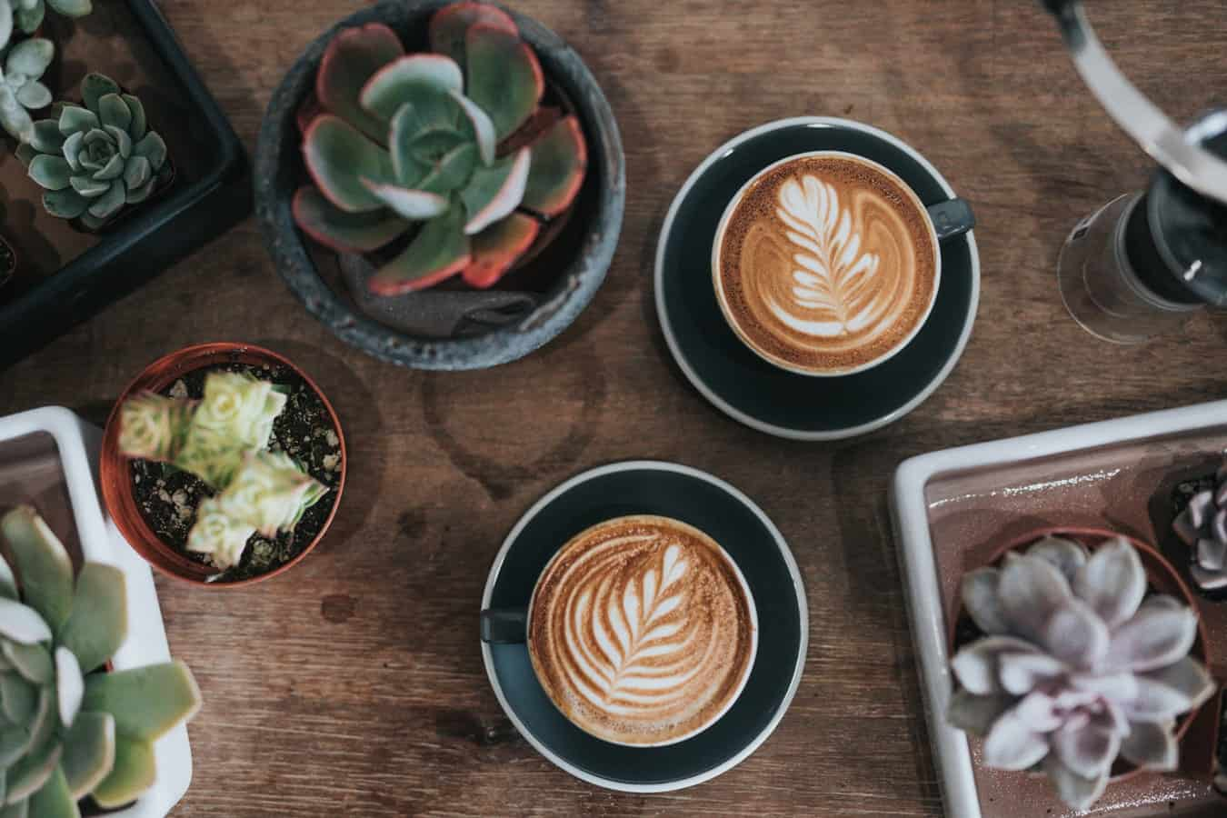 Two cups of coffee on a dark wooden table surrounded by succulents