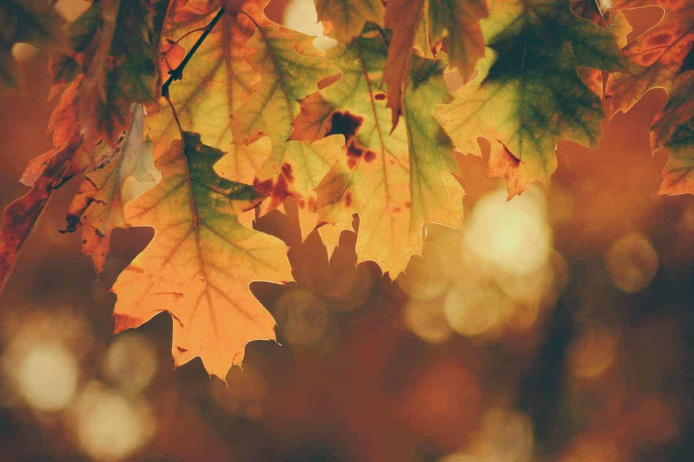 Autumn leaves with blurred background