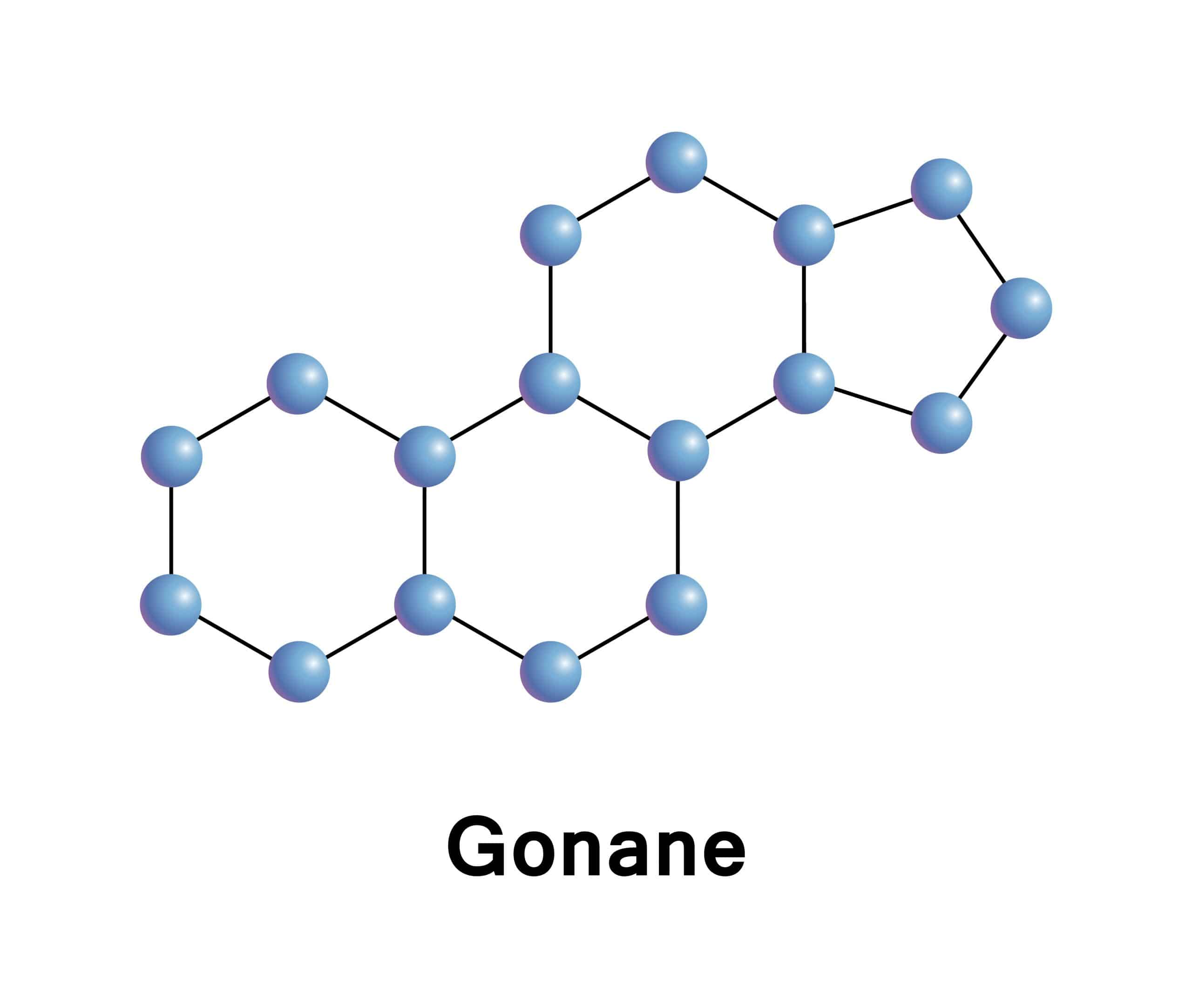 A diagram of the gonane molecule